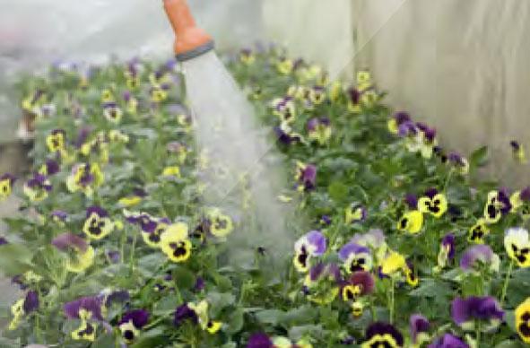 gardening-cm-pm